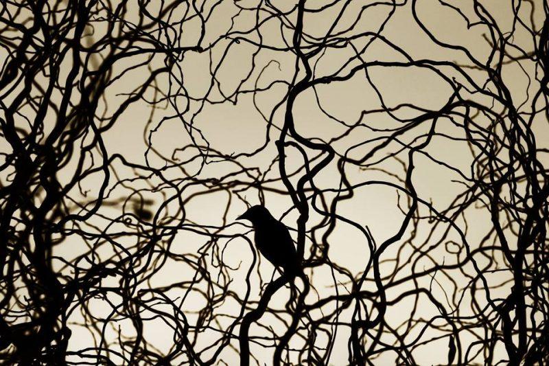 Bob Solo et Jacques Prévert : Salut à l'oiseau