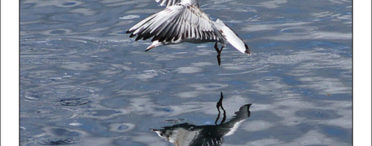 Vincent Robine : oiseaux de mer…