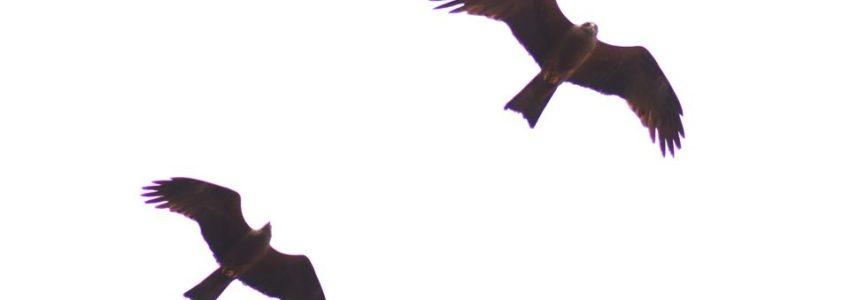 Bob Solo, plein les mirettes : Milans noirs au-dessus de la maison